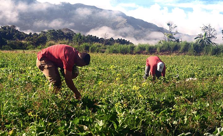 Agricultores pernambucanos receberão o Garantia-Safra